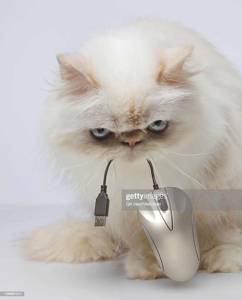 Persian Cat holding computer mouse : Stock Photo