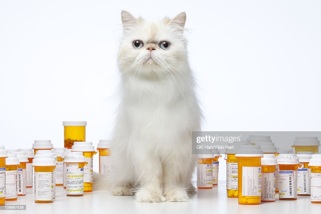 Persian Cat sitting with prescription bottles : Stock Photo