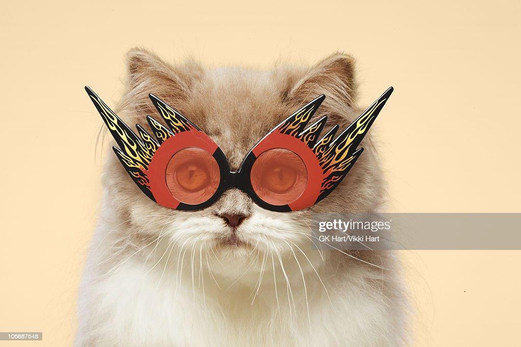 Persian Cat wearing Flaming Eye Glasses