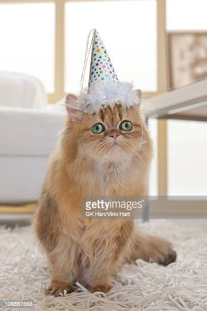 Persian Cat wearing Party Hat in living room