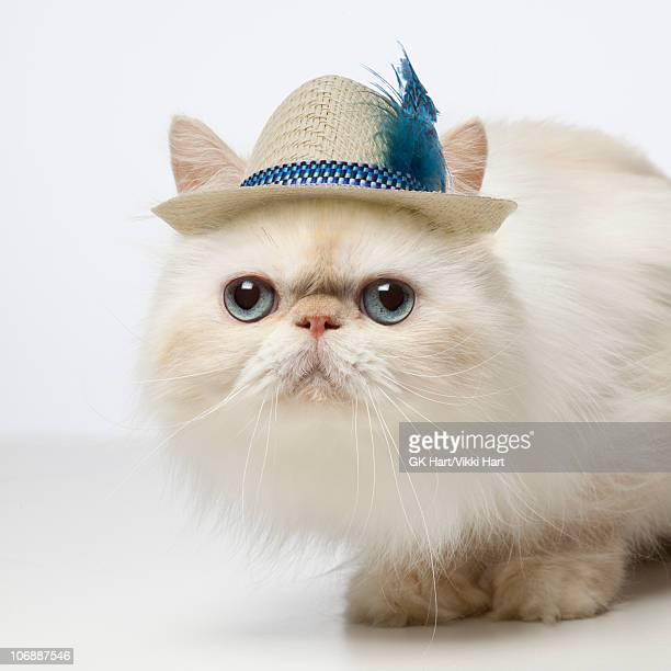 Persian Cat wearing Straw Hat