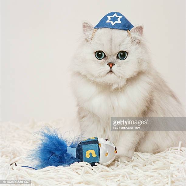 Persian cat wearing yarmulke and playing with dreidel toy