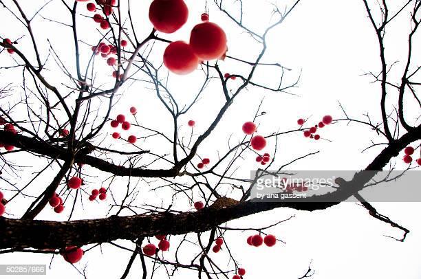persimmon: A Christmas tree