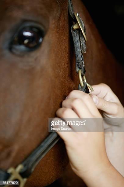 Person adjusting horse's bridle