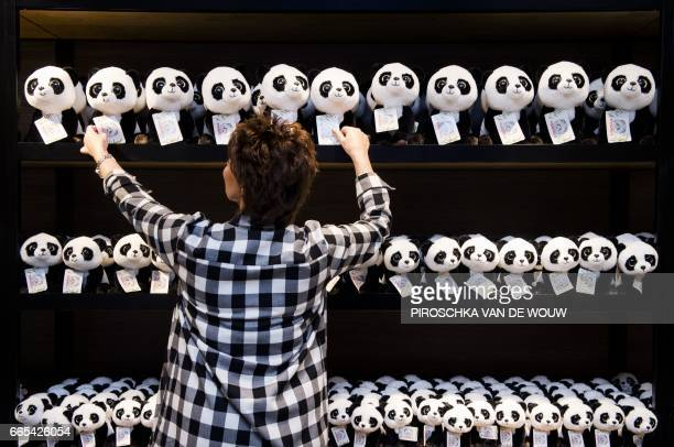 A person arranges stuffed pandas in a shop of the Ouwehands Zoo in Rhenen on April 6 2017 prior to the arrival on April 12 2017 from China of two...