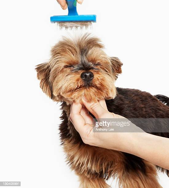 Person grooming dog