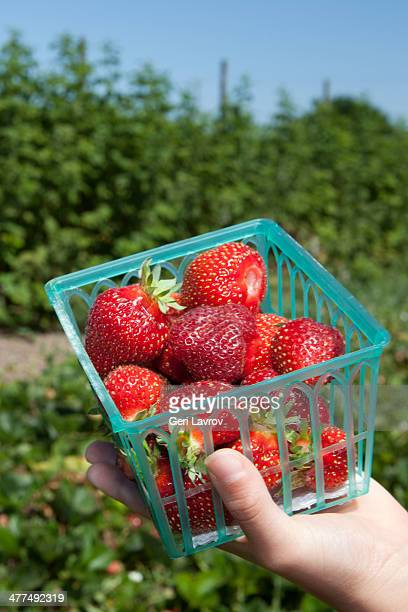 Person holding a carton of strawberries