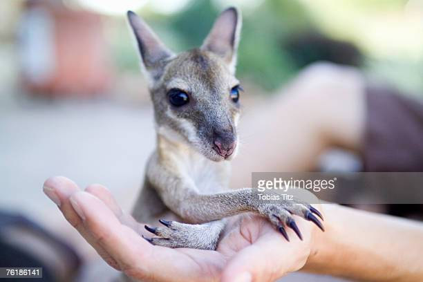 A person holding a Joey