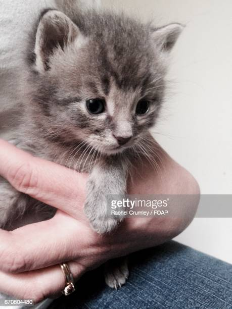 A person holding a kitten