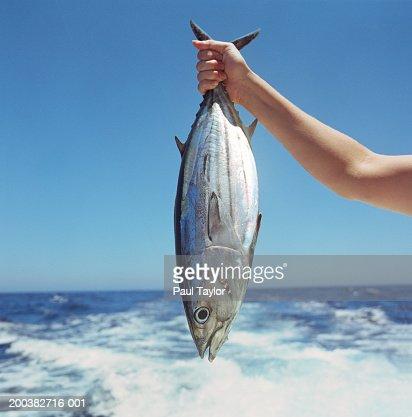 Person holding bonito by sea, close-up