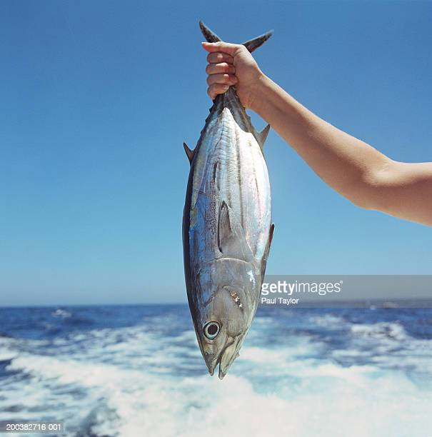 Person holding bonito by sea, close-up
