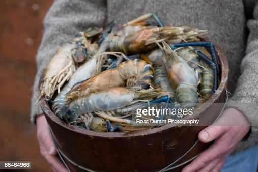 Person holding bucket of prawn