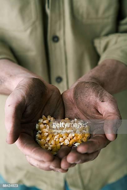 Person holding corn