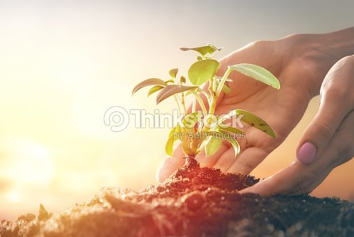 Person holding green sprout. : Stock Photo