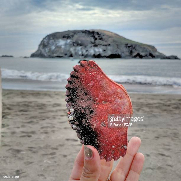 Person holding seashell