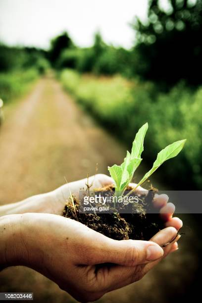 Person Holding Seedling of Plant On Farm