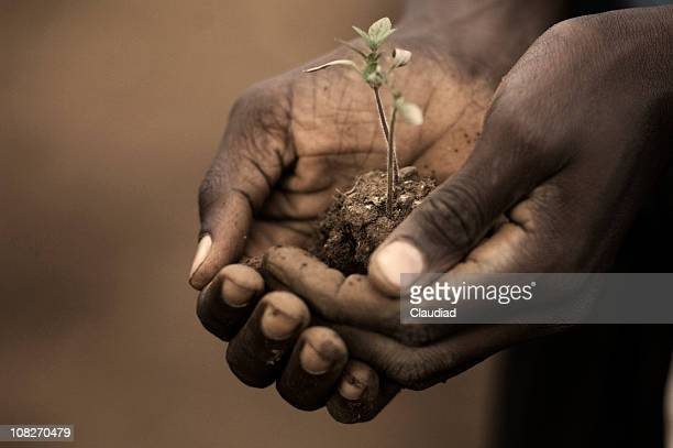Person Holding Seedling of Plant