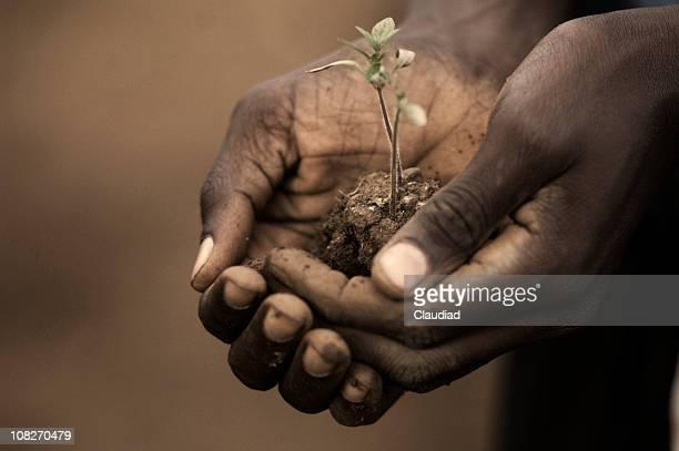 Person Holding Setzling von Plant
