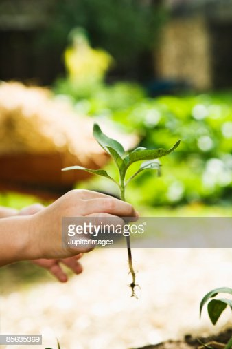 Person holding small plant : Stock Photo