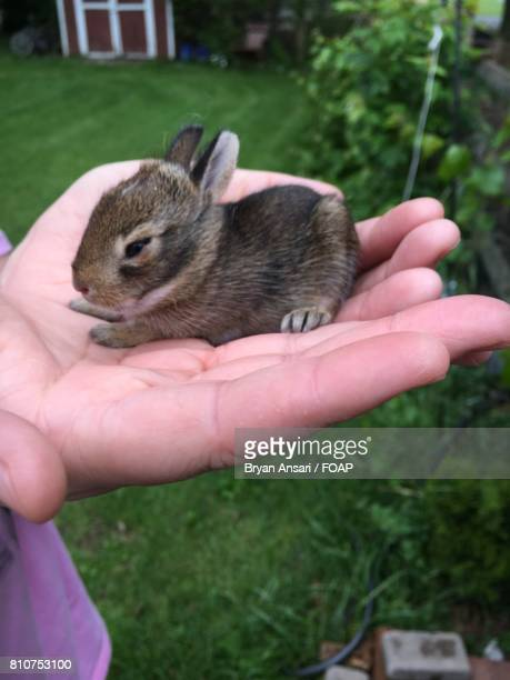 A person holding small rabbit