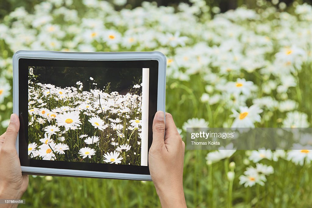 Person holding tablet computer and daisies : Stock Photo