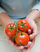 Person holding tomatoes