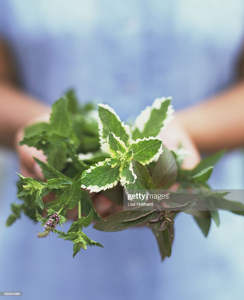 Person holding variety of mint