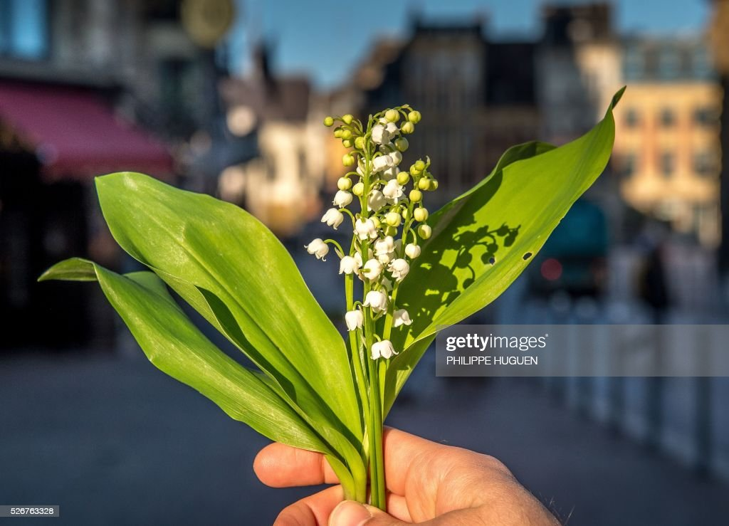 A person holds up a bouquet of lily of the valley flowers in Lille on May 1, 2016. / AFP / PHILIPPE