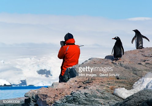 A person in an orange jacket photographing the scenery of the Antarctic Peninsula, observed by two Gentoo penguins.
