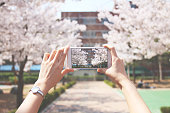 Mobile Phone, Photo Messaging, Smart Phone, Springtime, cherry blossoms