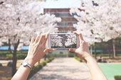 Mobile Phone, Photo Messaging, Smart Phone, Springtime, cherry blossoms