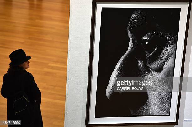 A person looks at pictures by British photographer David Bailey during the private preview of the exhibition 'Stardust' on February 28 2015 in Milan...