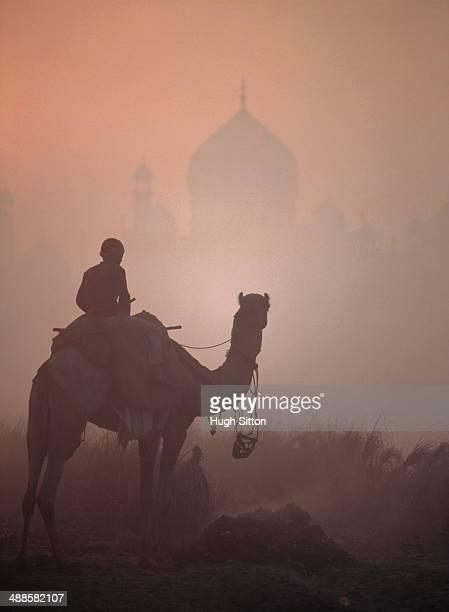Person on camel, Taj Mahal in background, Agra, Uttar Pradesh, India