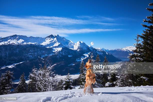 Person On Snowcapped Mountain Against Blue Sky