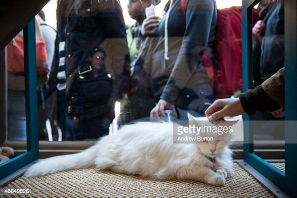A person pets a cat in the popup shop 'Cat Cafe' as others wait in line on April 24 2014 in New York City The cafe which has been created Purina One...
