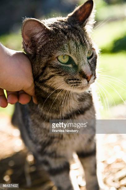 Person petting cat