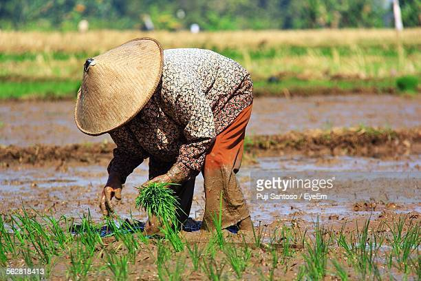 Person Planting Crop In Field