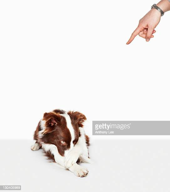 Person scolding embarrassed dog