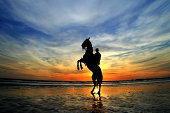 Person sitting on prancing horse at sunset