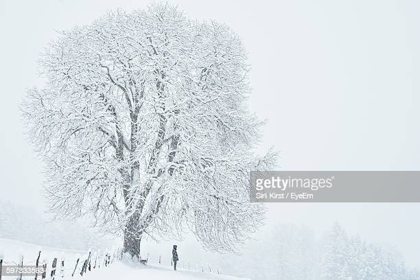 Person Standing On Snow Covered Field By Frozen Tree