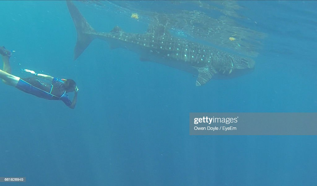 Person Swimming By Whale Shark In Sea