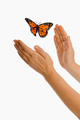 Person trying to catch butterfly