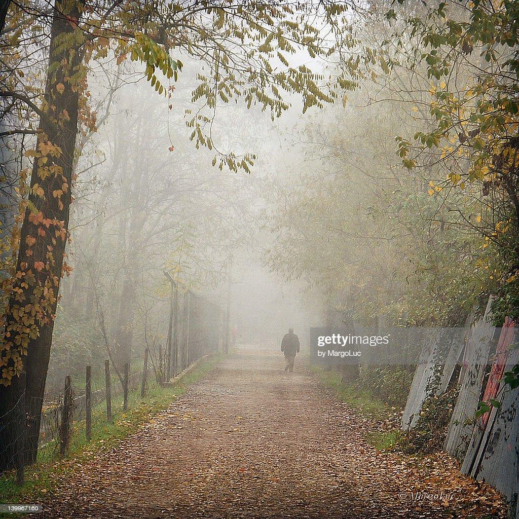 person walking along tree in mist : Stock Photo