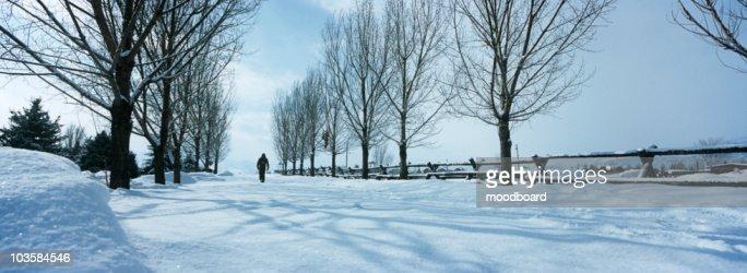 Person walking in snow between trees : Foto de stock