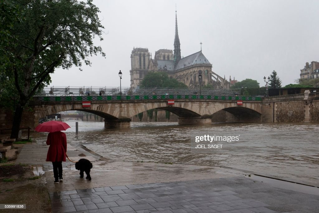 A person walks a dog by the river Seine near the Notre Dame cathedral after its banks became flooded following heavy rainfalls on May 31, 2016 in Paris. France's weather agency Meteo France maintained today 18 departments under orange alert for heavy rainfalls, which have already disrupted transports in the northeastern part of the country. / AFP / JOEL