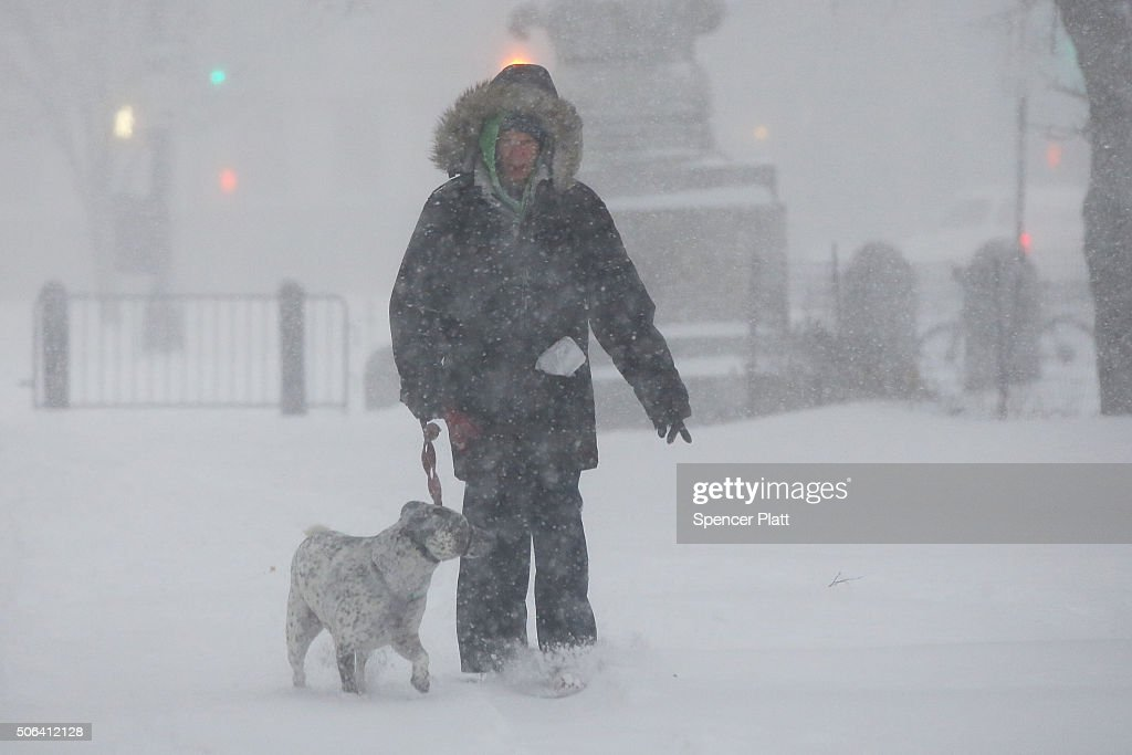 A person walks a dog through blizzardlike conditions on January 23 2016 in the Brooklyn borough of New York City The Northeast and parts of the South...