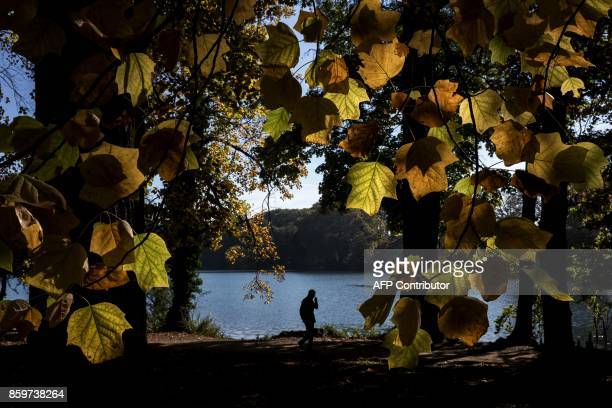 A person walks past trees in the Parc de la Tete d'Or on October 10 2017 in Lyon / AFP PHOTO / JEFF PACHOUD