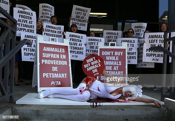 TV personality Courtney Stodden protests PetSmart for PETA on April 14 2016 in Los Angeles California