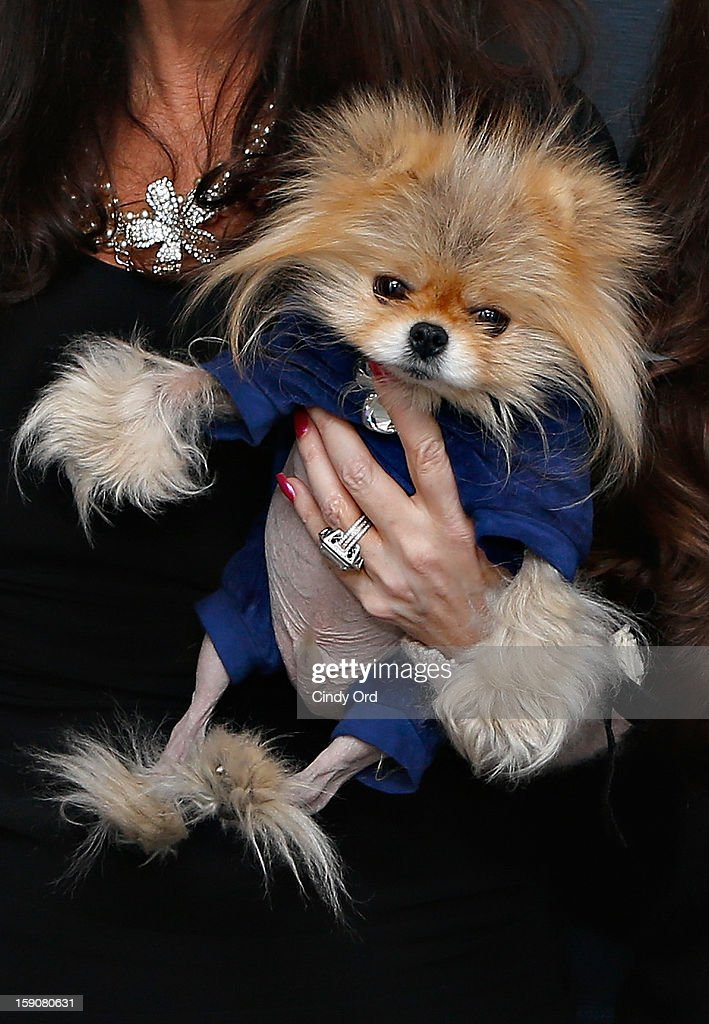 TV personality Lisa Vanderpump's dog Giggy visits the SiriusXM Studios on January 7, 2013 in New York City.