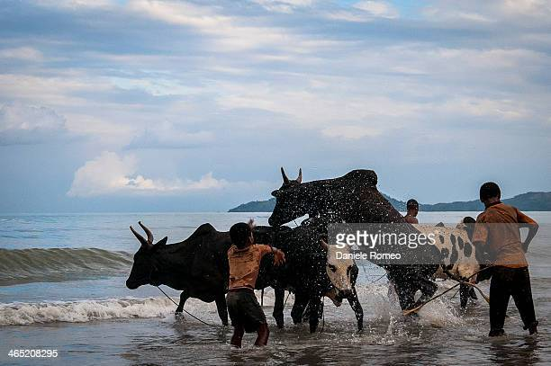 CONTENT] Persone bambini adulti africa Animali Zebu Zebù Composizione orizzontale Ambientazione esterna Madagascar Nosy Bé Sea Beach Animale...